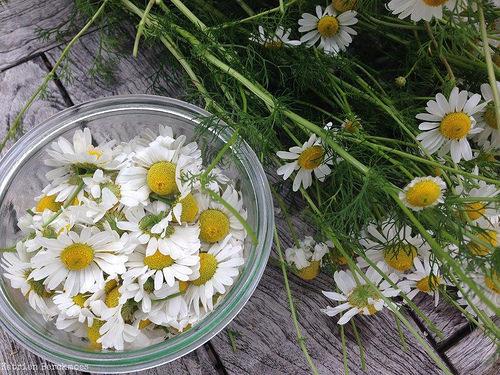 floweressence